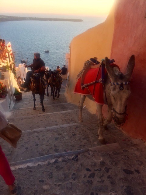 If you don't want to walk, you can always take the donkeys!